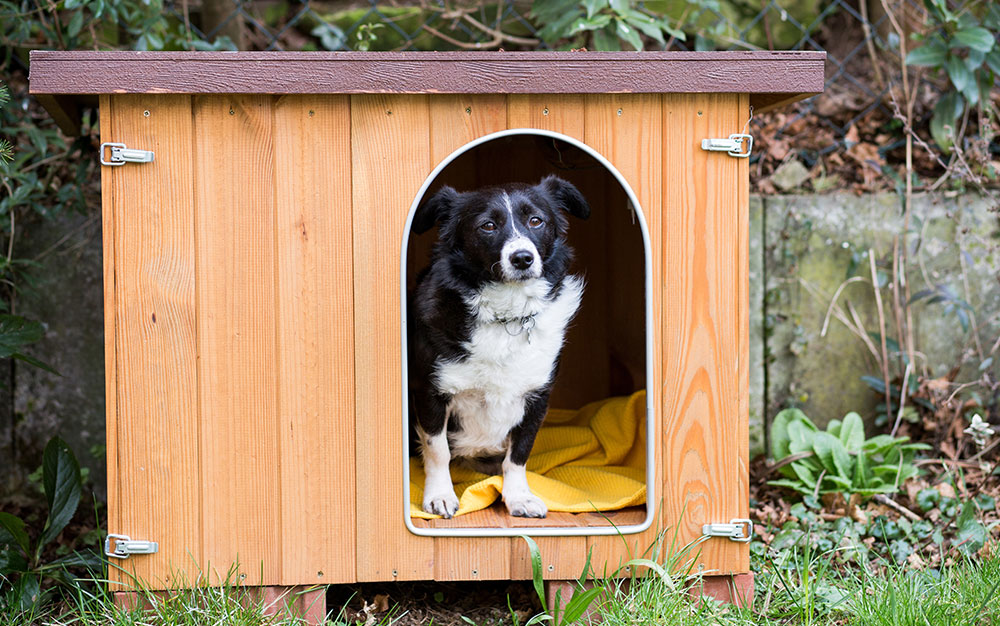 Dog-in-garden-kennel