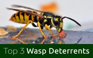 Top 3 Wasp Deterrents