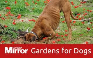 Feature-image-dog-friendly-garden