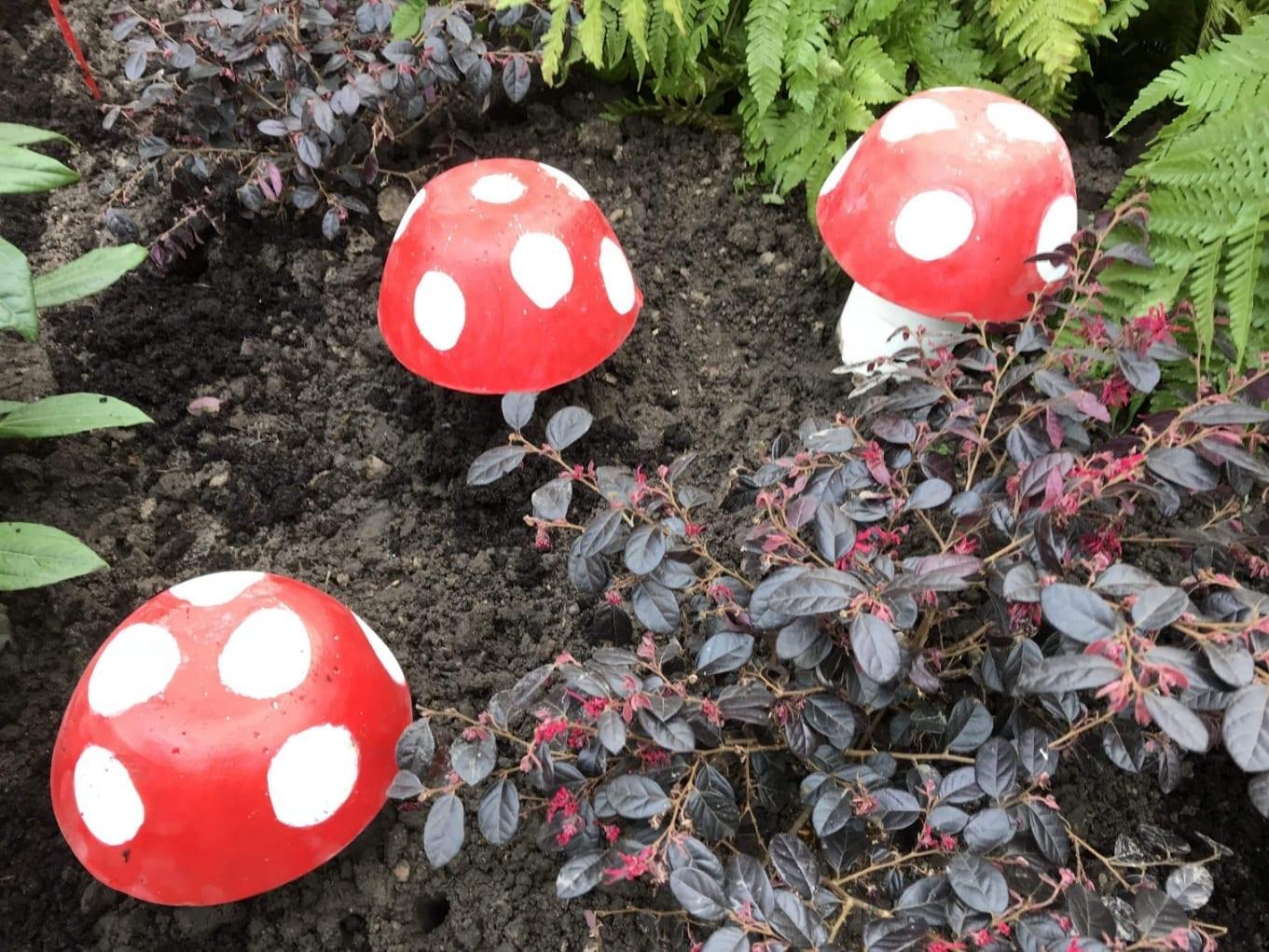 Toadstools in the Hospital Garden