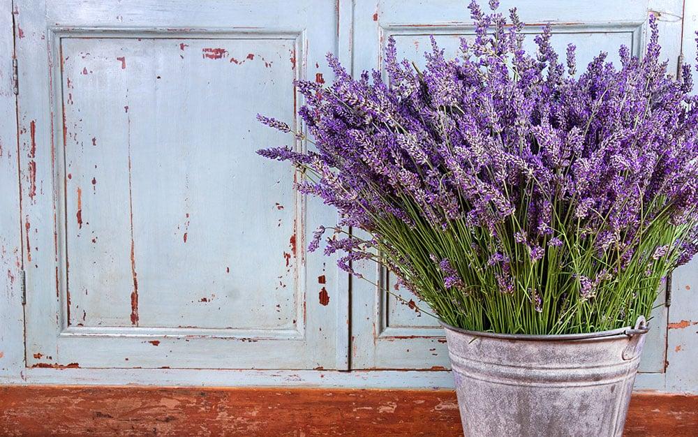 Lavender-in-front-of-door