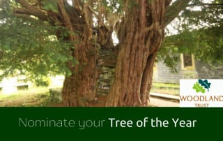 Tree of the Year