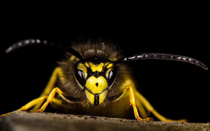 Top 3 Wasp Deterrents - David Domoney wasp-free summer garden