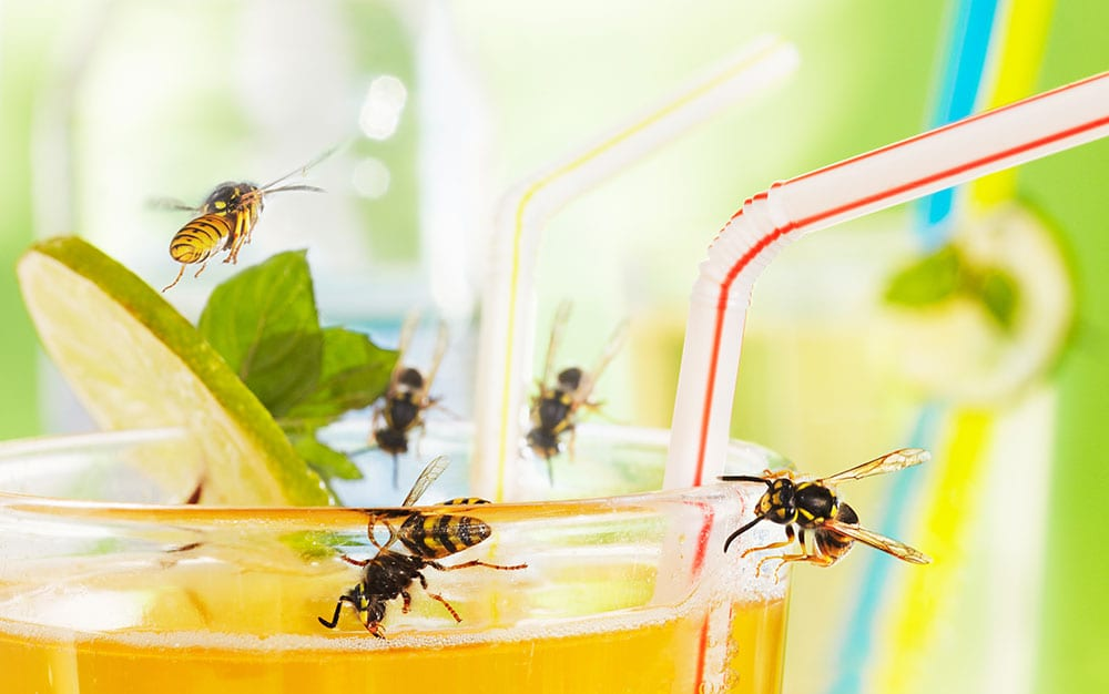 Wasps-on-sweet-drink