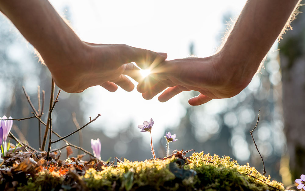 Hands-touching-in-sunshine-over-growing-flower