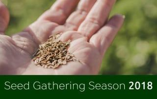 Seed Gathering