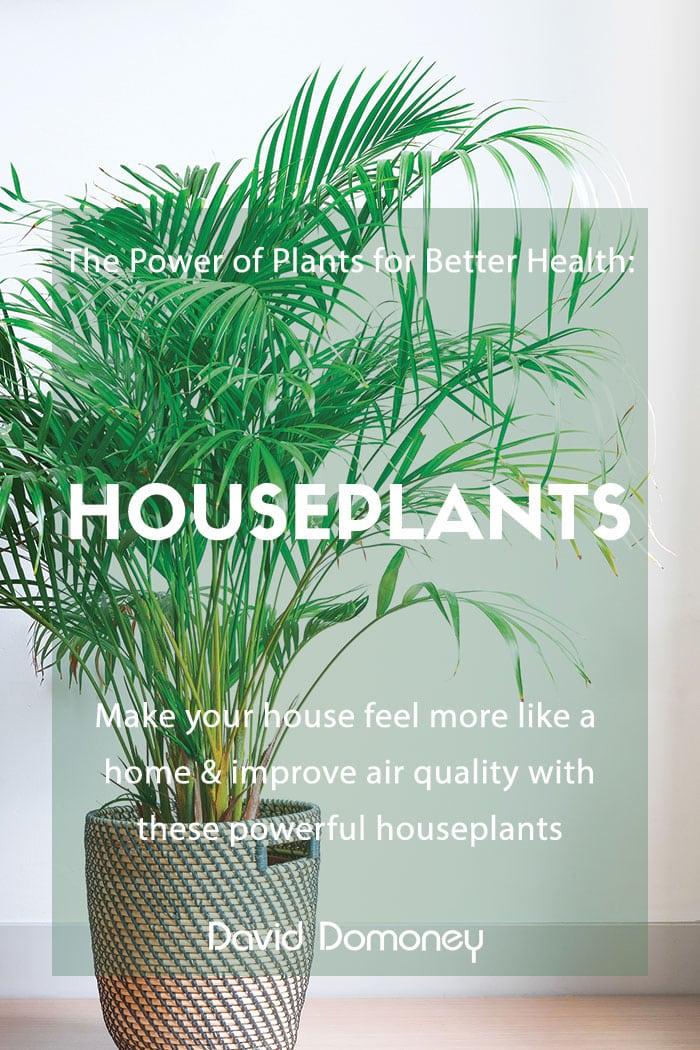 power of plants houseplants