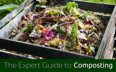 The expert guide to composting