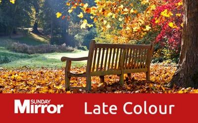 Late Garden Colour