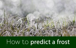 predict a frost