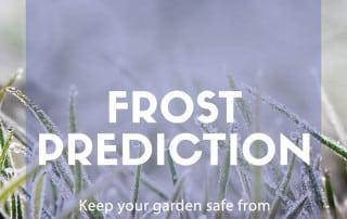 predict frost