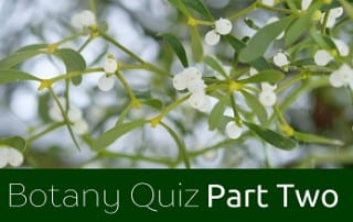Botany Quiz Part Two