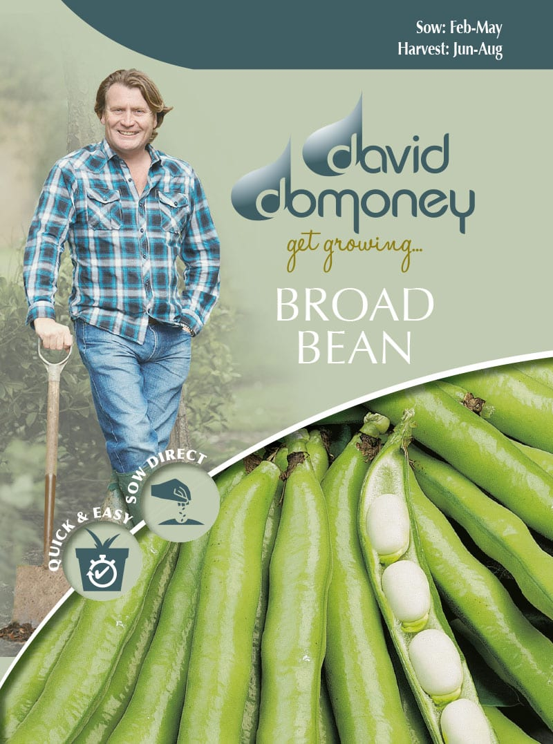 get growing broad bean