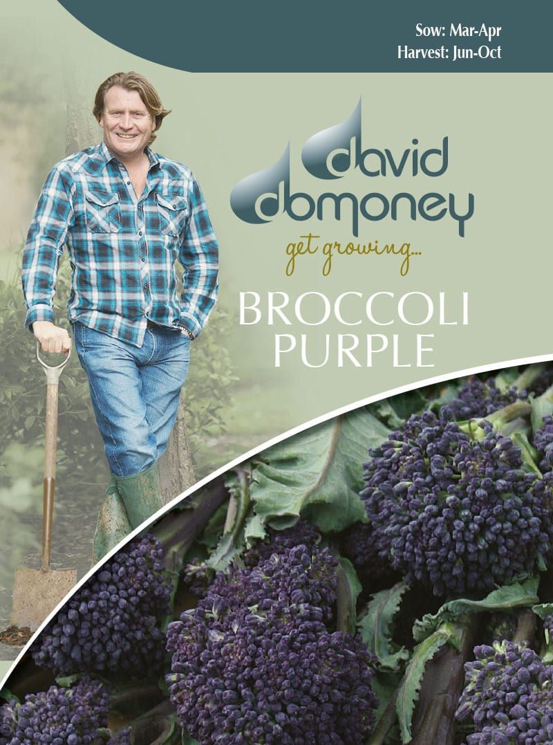 broccoli purple