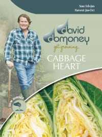 cabbage heart