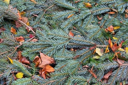 Fir Tree Composting Christmas