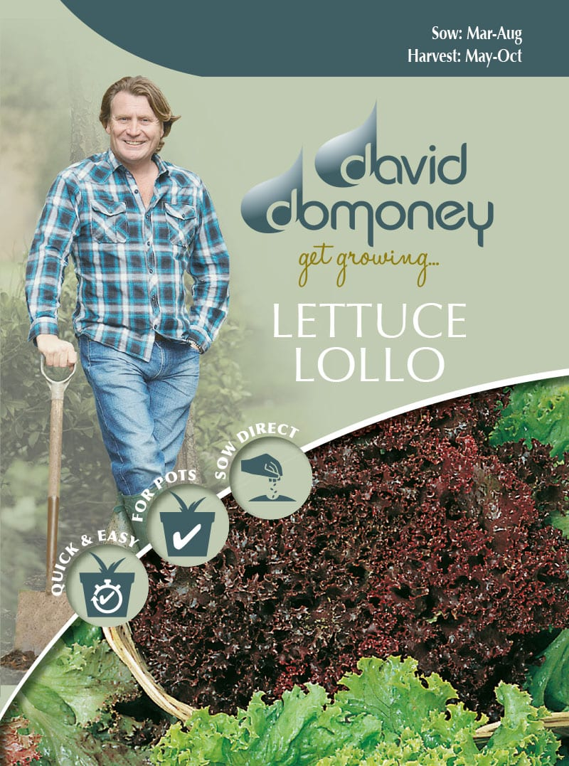 lettuce lollo