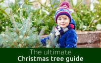 Christmas tree guide