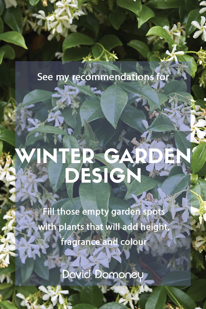 Winter garden design
