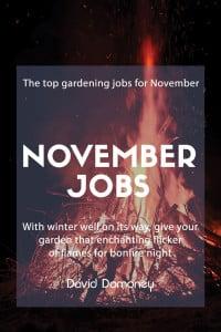 november jobs