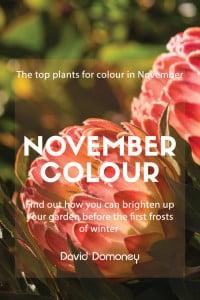 november colour