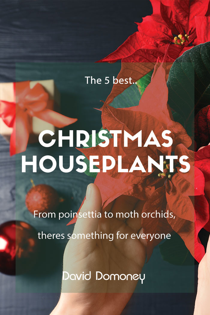 5 best christmas houseplants