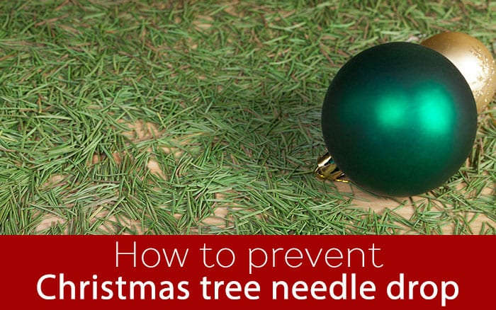 5 Top Tips To Stop Your Christmas Tree Dropping Its Needles