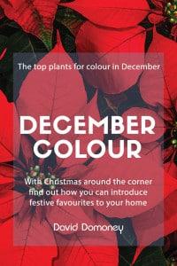 december colour