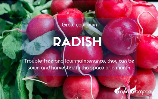 Grow Your Own Radish