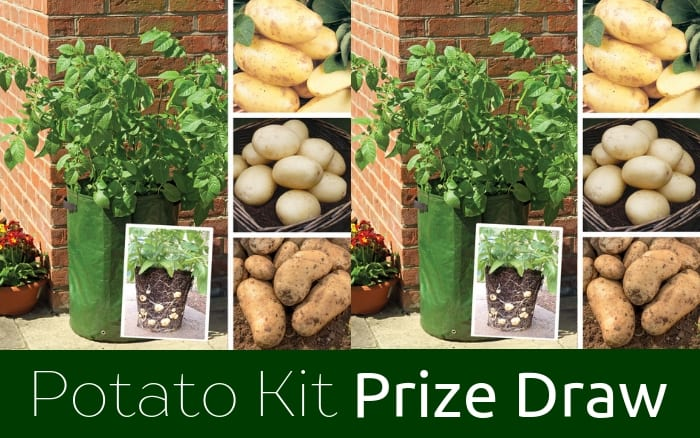 Prize Draw Patio Potato Kit
