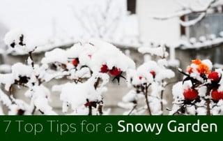 Snow filled garden
