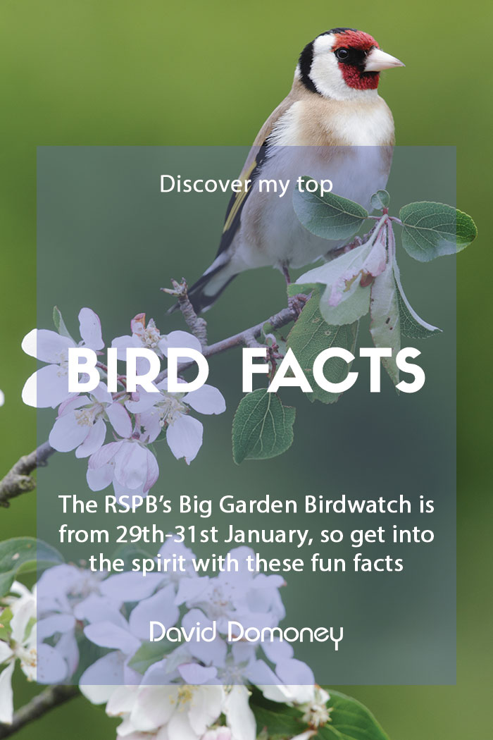 Top bird facts