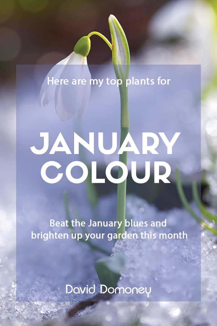 January colour