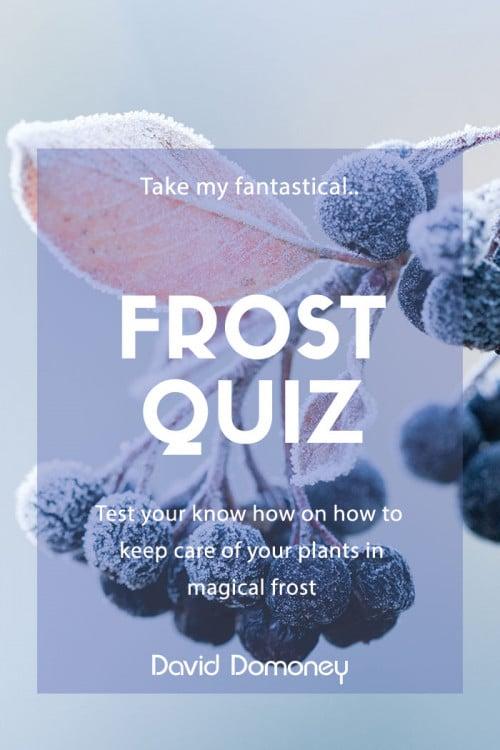 frost quiz