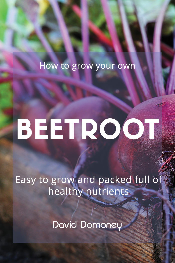 grow-your-own-garnish