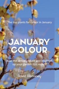 January colour