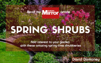 Spring Shrubs
