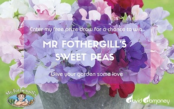 Win Mr Fothergill's Sweet Peas in my free prize draw