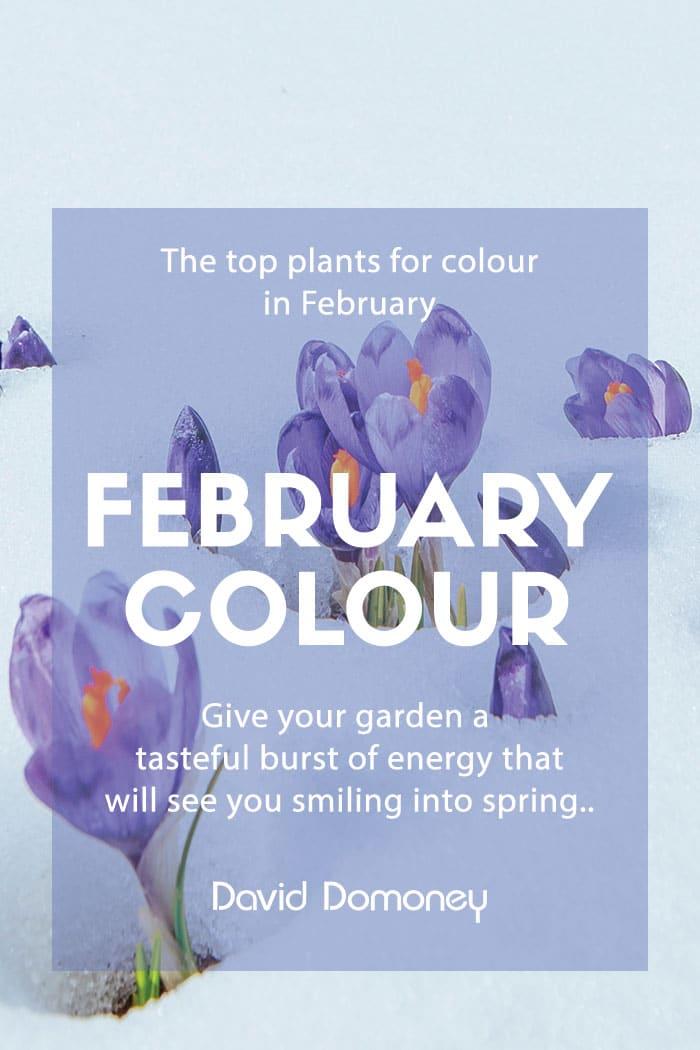 February colour