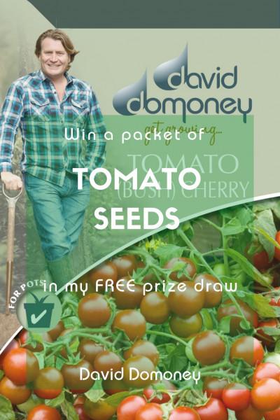 Win Tomato Seeds