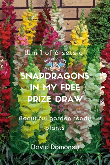 Win snapdragons in my prize draw