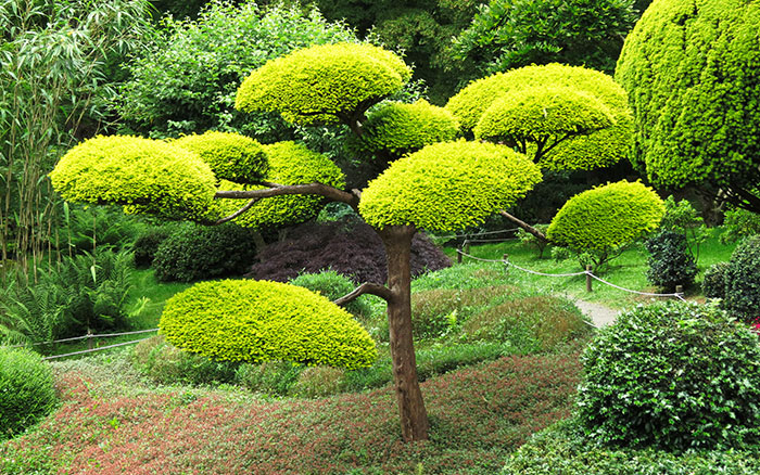 Design Ideas For A Japanese Garden David Domoney