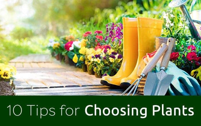 Tips for choosing plants blog