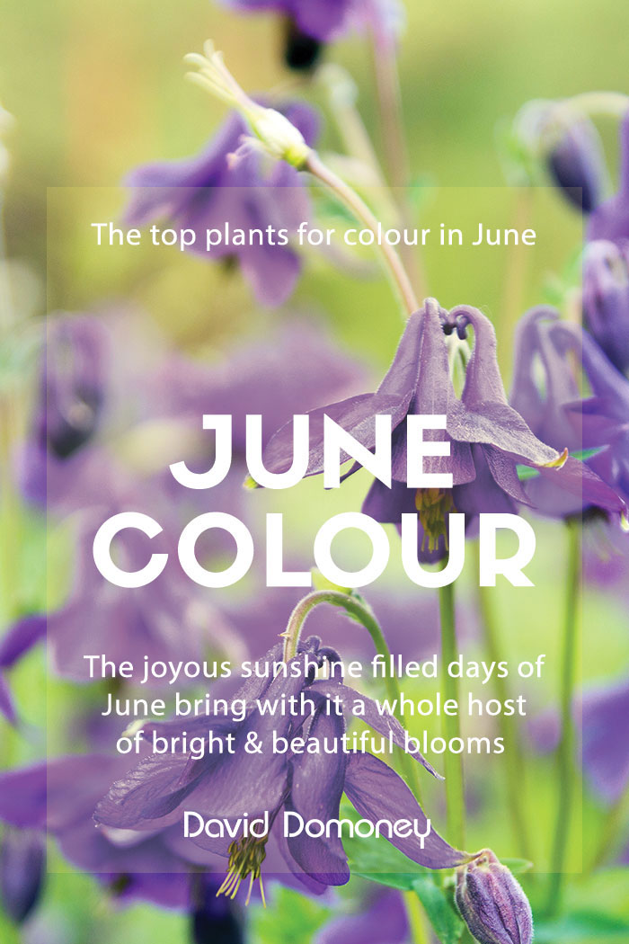 june colour