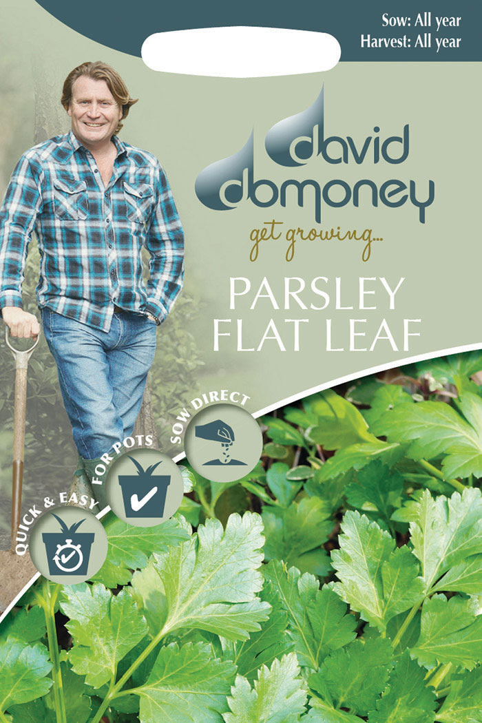 parsley flat leaf