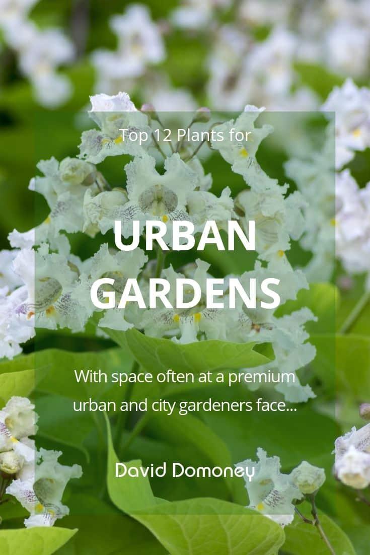 urban garden blog