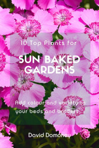 10 plants for hot gardens