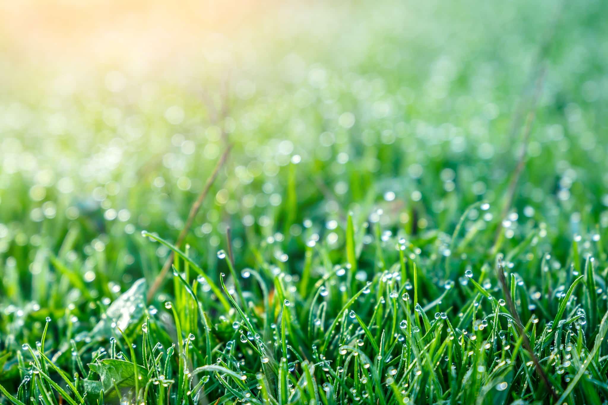 Weeding-lawn