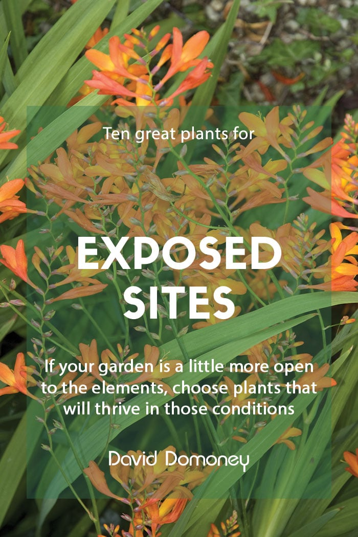 Ten plants for exposed sites and gardens