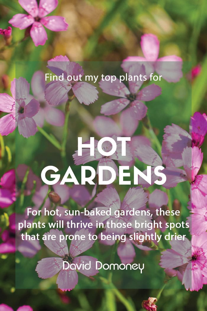 Top plants for hot gardens